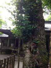 天岩戸神社7