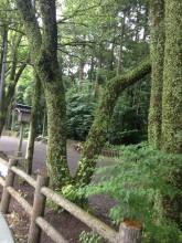 天岩戸神社11